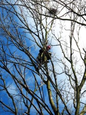 Formowanie koron drzew Warszawa