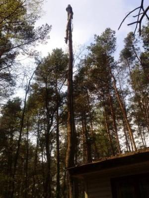 Prześwietlanie i wycinka drzew